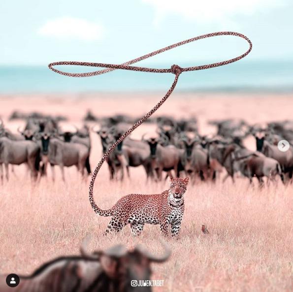 2020-01-01 17_12_51-Julien Tabet (@julien.tabet) • Photos et vidéos Instagram